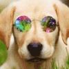 hipster avatar